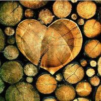 We Love Wood